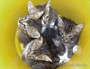 /Balaio de Gatos