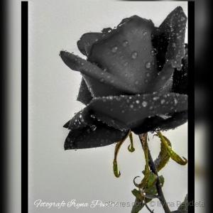 /Flor..
