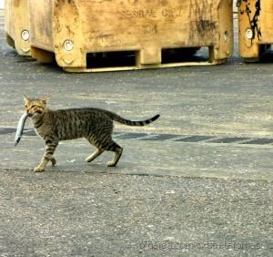 /O gato foi à Lota de Sesimbra 2/2 A GLÓRIA DO GATO