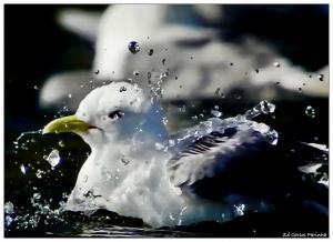 /Brincadeiras na água(2)!