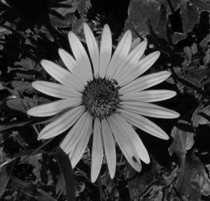 /Flores I