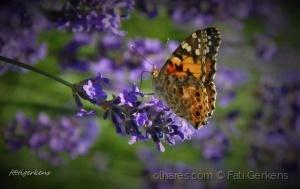 Macro/Enfeitas o meu jardim e tocas a minha alma!