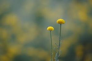 Macro/Amarelo