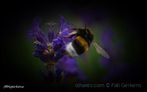 Macro/ A abelha e flor!