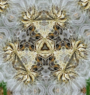 /Intricate design...Kaleidoscope...