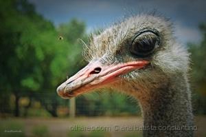 Animais/A Avestruz fotogénica
