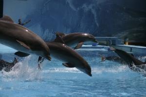 Espetáculos/Golfinhos