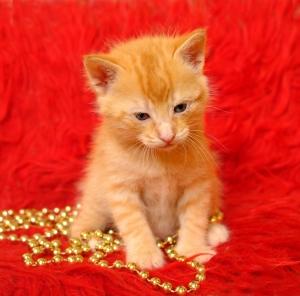 Animais/Um doce dourado