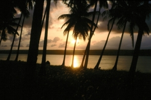 Paisagem Natural/Por do sol... paraia... palmeiras...