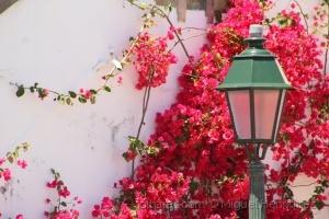 Paisagem Urbana/Flores de rua...