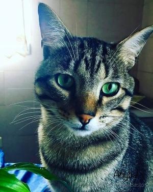 Outros/Olhos de Felino