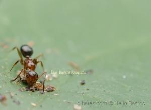 Outros/vida de insecto--