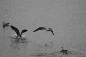 Animais/aterragem forçada