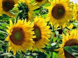 Macro/Bees & Flowers