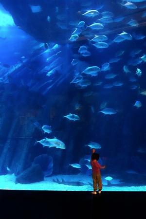 Animais/A menina e um pedacinho de mar