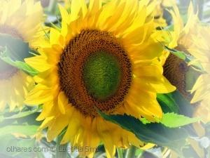 Paisagem Natural/Sun rose