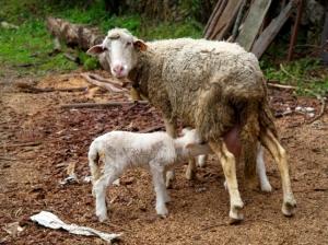 /acto exclusivamente materno