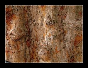 /o sorriso do tronco