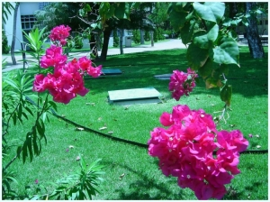 /Flores universitárias