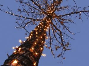 /Árvore de Natal