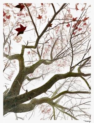 Paisagem Natural/outono.