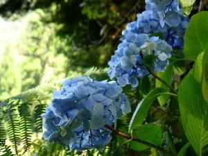 """Paisagem Natural/""""Azul e Verde"""""""