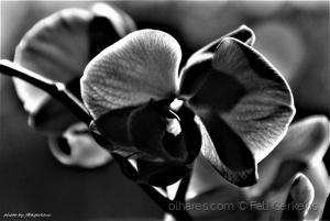 Macro/Flores a P&B