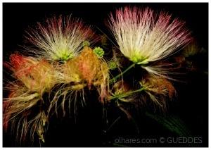 Outros/Flores...de noite