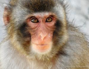Animais/Primata