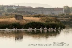 Outros/Flamingos