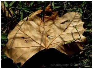 Outros/Texturas de Outono