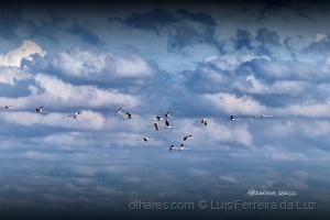 Outros/Flamingos voando.