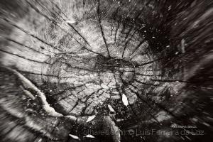 Outros/Um tronco cortado