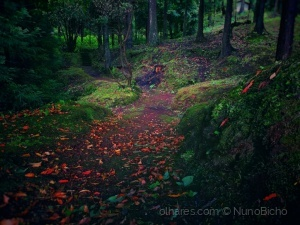 Paisagem Natural/Chegada do Outono