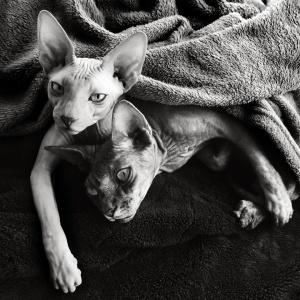 Animais/descanso antes de nova guerra
