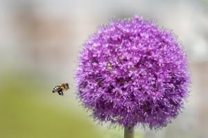 Macro/carregando nectar