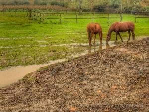 Animais/#horse