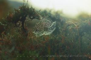 Paisagem Natural/Teia de Indra