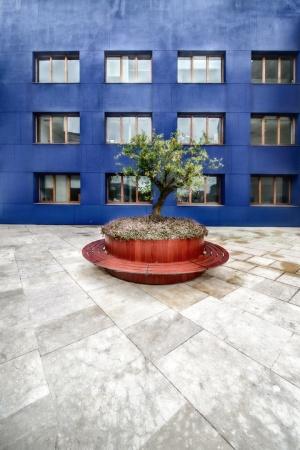 Gentes e Locais/Composição com árvore e parede azul