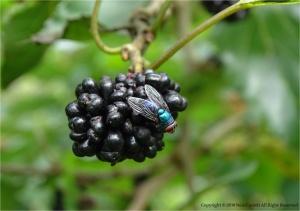 Paisagem Natural/Até a mosca tem sua beleza...