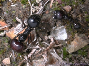 Macro/Formigas
