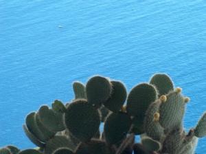 Paisagem Natural/Espreitar o oceano através dos espinhos