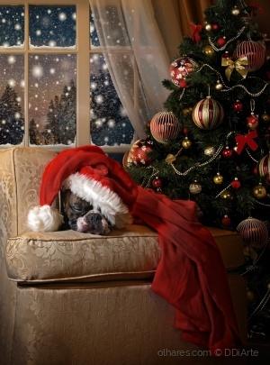 Animais/Esperando o Pai Natal