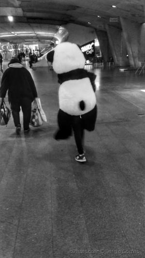 Gentes e Locais/Panda cansado