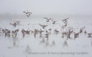 Animais/Aves na névoa