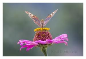 Macro/O néctar da borboleta, Nunes Vinhais