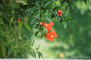 Paisagem Natural/Flor da romaneira