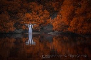 Outros/A Dama do lago