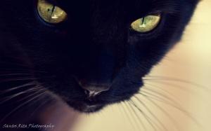Animais/Olhar de pantera negra !