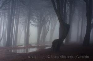 Paisagem Natural/Árvores velhas